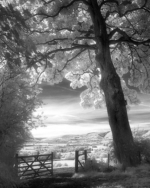 IR-Looking across Radnor Valley